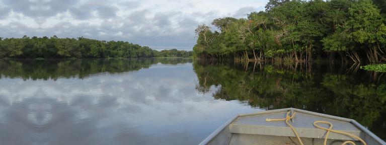 Manos unidas con la Amazonía: sínodo amazónico