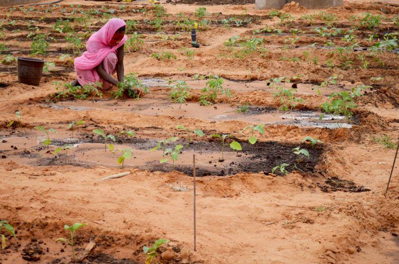 El hambre vuelve a aumentar_Foto:Manos Unidas/Myriam Sagastizabal en Mauritania