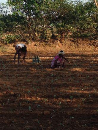 Mujeres recolectando en Coimbatore, India