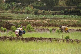 Campesinos de Madagascar. Foto: Manos Unidas / Javier Mármol
