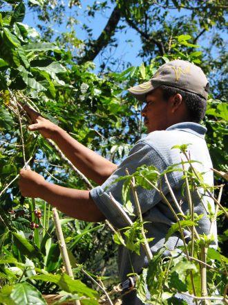 Agroecología y alternativas de desarrollo ante el cambio climático