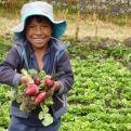 Niño agricultor del Perú