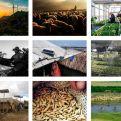 Mosaico de la Exposición fotos Inspira el Cambio #InspireChange