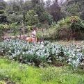 Promoción de agroecología en comunidades con escasos recursos y alto desempleo. Manos Unidas Valencia
