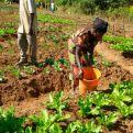 Mujeres en los huertos en Kilela Balanda