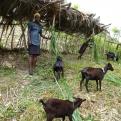 Proyecto Caritas Jacmel, Haiti