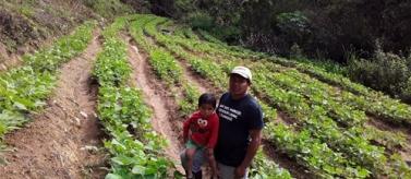 Avanzar en la sostenibilidad agroalimentaria en comunidades Lencas (Honduras)