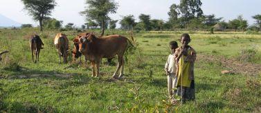 Seguridad alimentaria. Acaparamiento de tierras en Etiopía