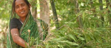 Mujer recogiendo ramas en Bongaigaon
