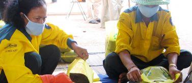 Personas envasando abono orgánico en Phnom Penh, Camboya