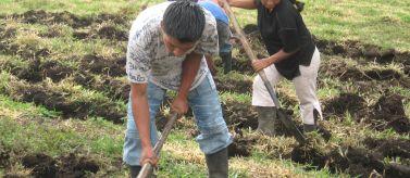 Soberanía alimentaria: fortalecimiento cultural y organizativo de pueblos indígenas