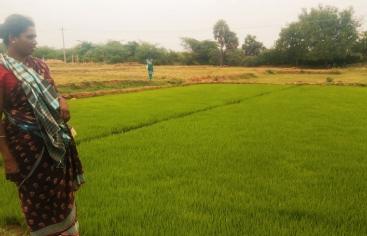 India - Foto Manos Unidas TREE Trust