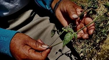 Mujer y cambio climático, en defensa de la tierra. Foto:Manos Unidas en Ecuador