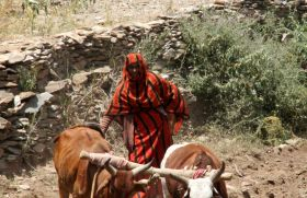 Halima arando sus tierras. Etiopía.