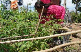 Soberanía alimentaria y desarrollo económico de comunidades indígenas