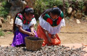 Desarrollo integral de comunidades indígenas