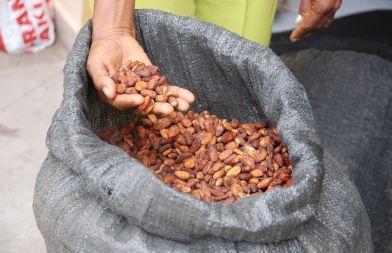 Fomento del Corredor Solidario del Cacao en la zona centro de la costa ecuatoriana, en las provincias de Santo Domingo de los Tsáchilas y Manabí